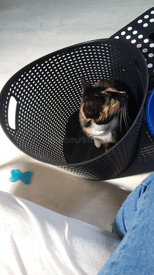 Katt i tvättkorg royaltyfri bild