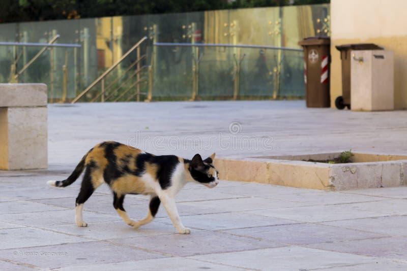 Katt i varning i staden royaltyfri bild