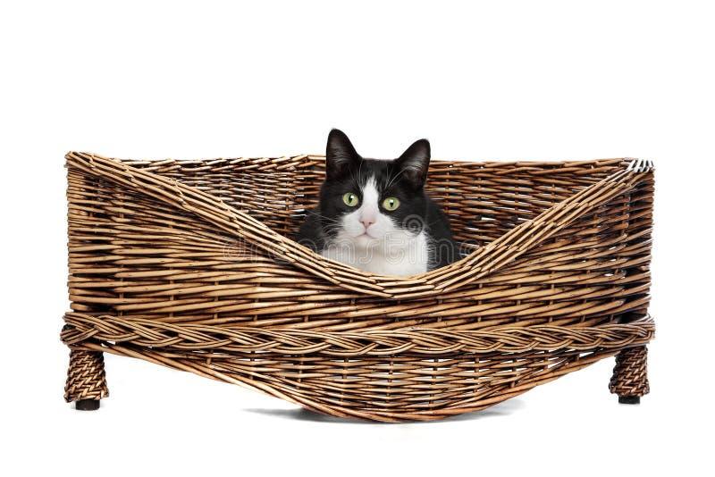 Katt i vide- underlag royaltyfria foton
