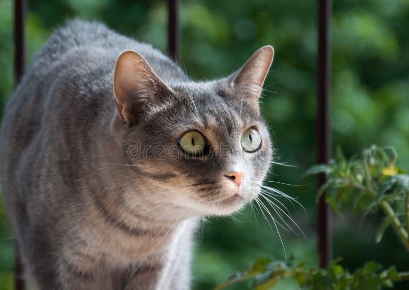 Katt, innan att jaga royaltyfri foto
