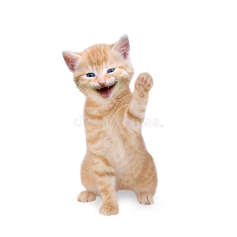 Katt/kattunge som skrattar och vinkar arkivfoto