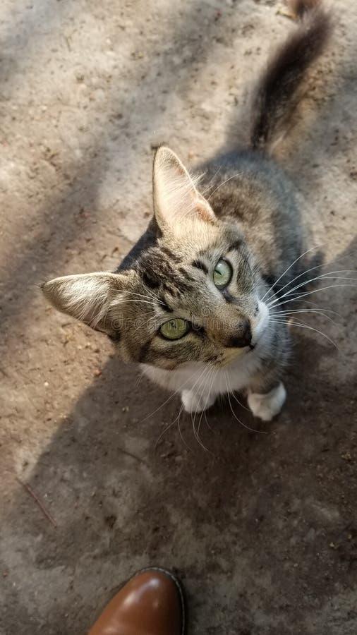 Katt kitty feline fury Tom arkivfoton