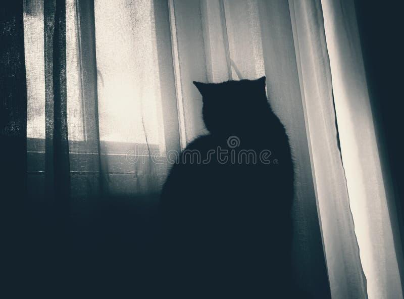 Katt mörker, fönster som ser, atmosfär royaltyfria foton