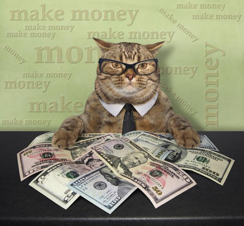 Katt med amerikanska dollar 3 arkivfoto