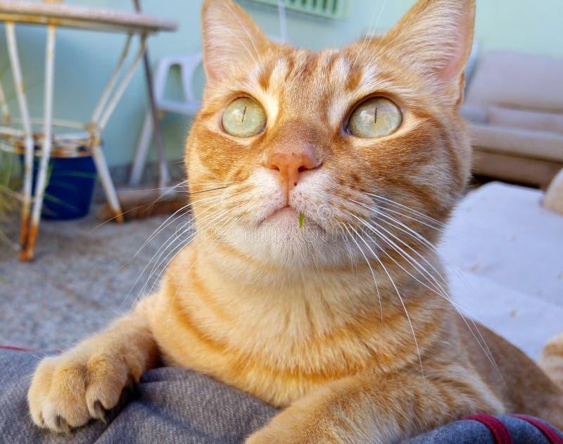 Katt med breda gröna ögon royaltyfri foto