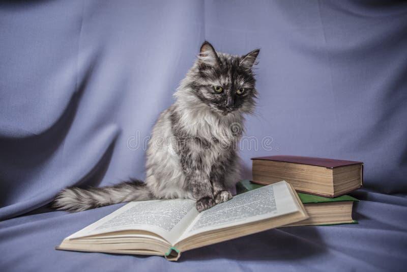 Katt med den öppna boken royaltyfri foto
