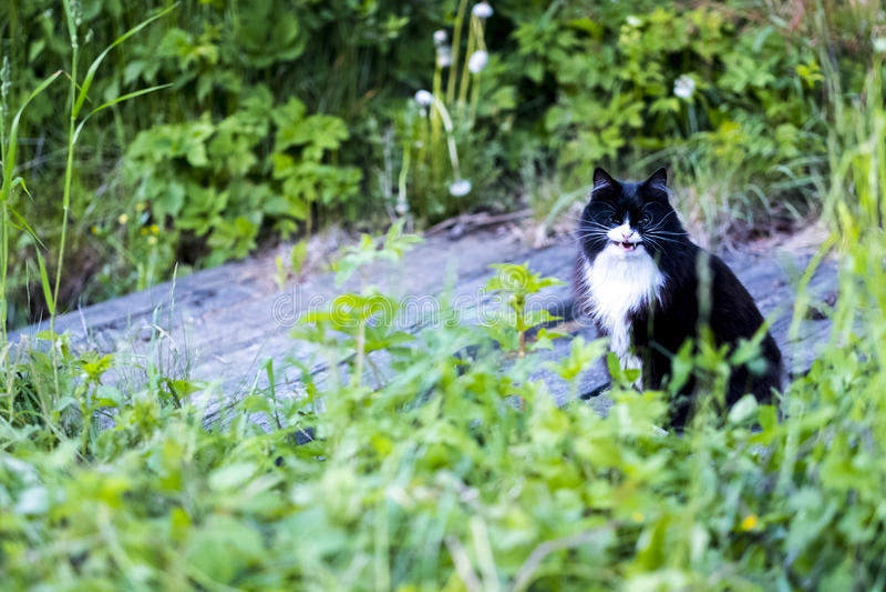 Katt med devilɾn; s-leende royaltyfria bilder