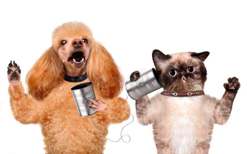 Katt med en hund på telefonen med en can royaltyfria bilder