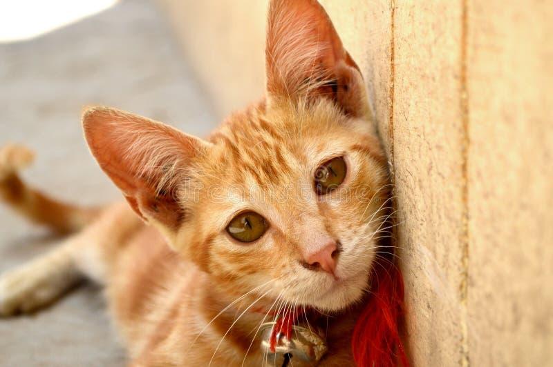 Katt med en klocka arkivbilder