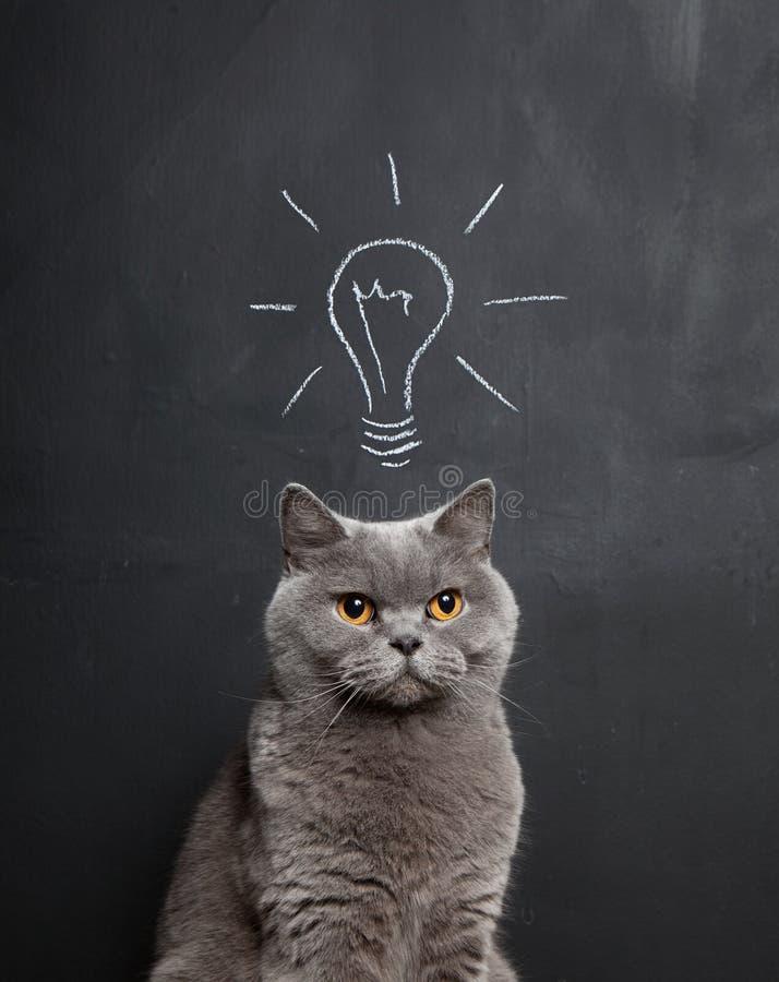 Katt med en ljus idé royaltyfria bilder