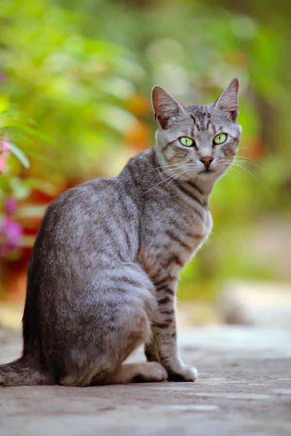 Download Katt med gröna ögon fotografering för bildbyråer. Bild av huvud - 27285053