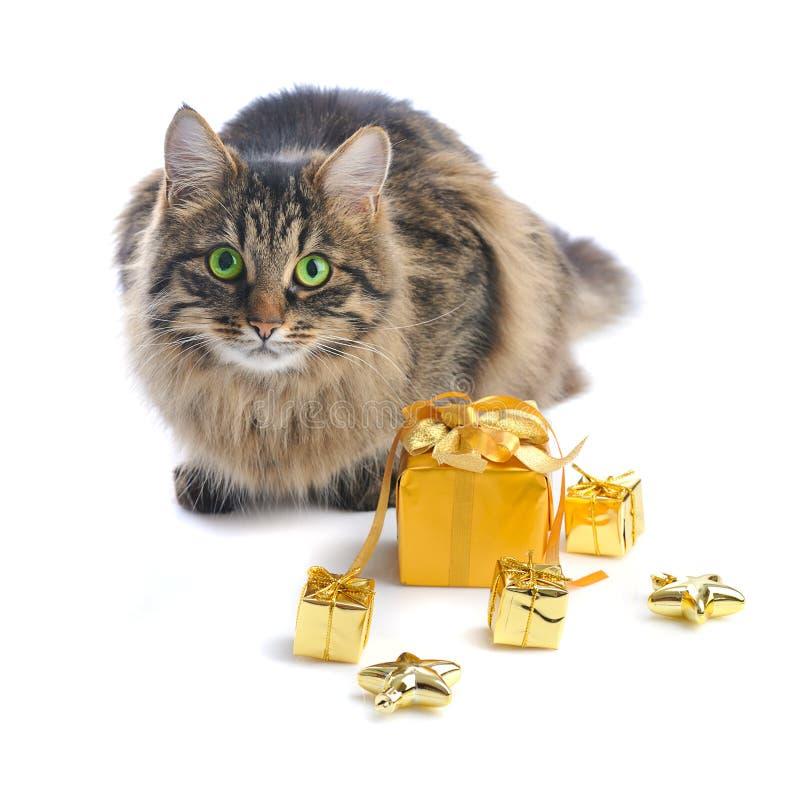 Katt med guldgåvaaskar royaltyfri bild