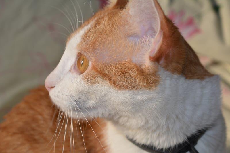 Katt med härliga ögon royaltyfri fotografi