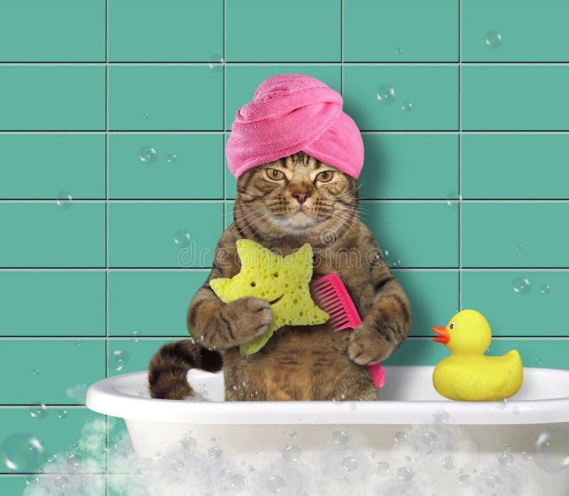 Katt med hårkam- och badsvampen arkivbild