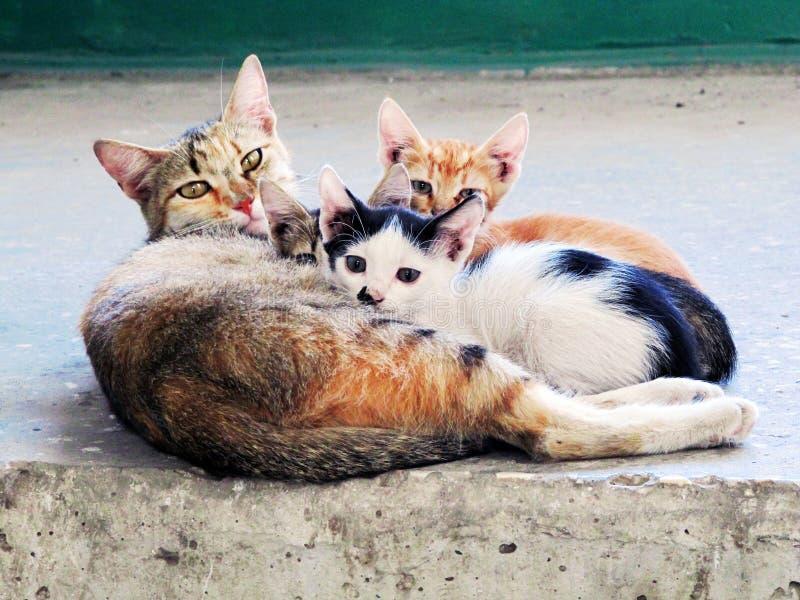 Katt med hennes kattungar arkivfoto