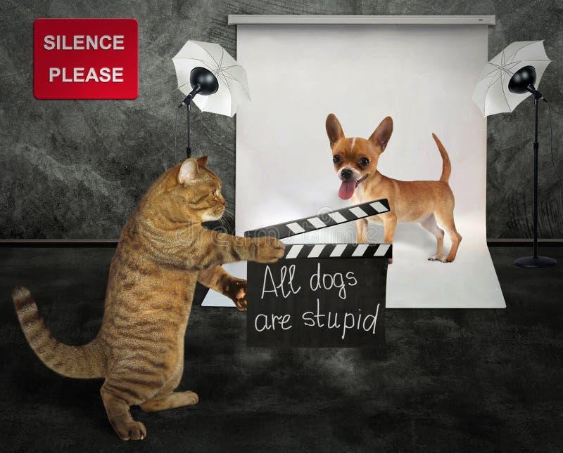 Katt med hunden i studio arkivfoton