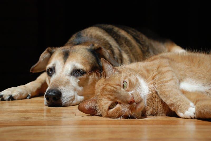 Katt med hunden som ligger på golv arkivfoto