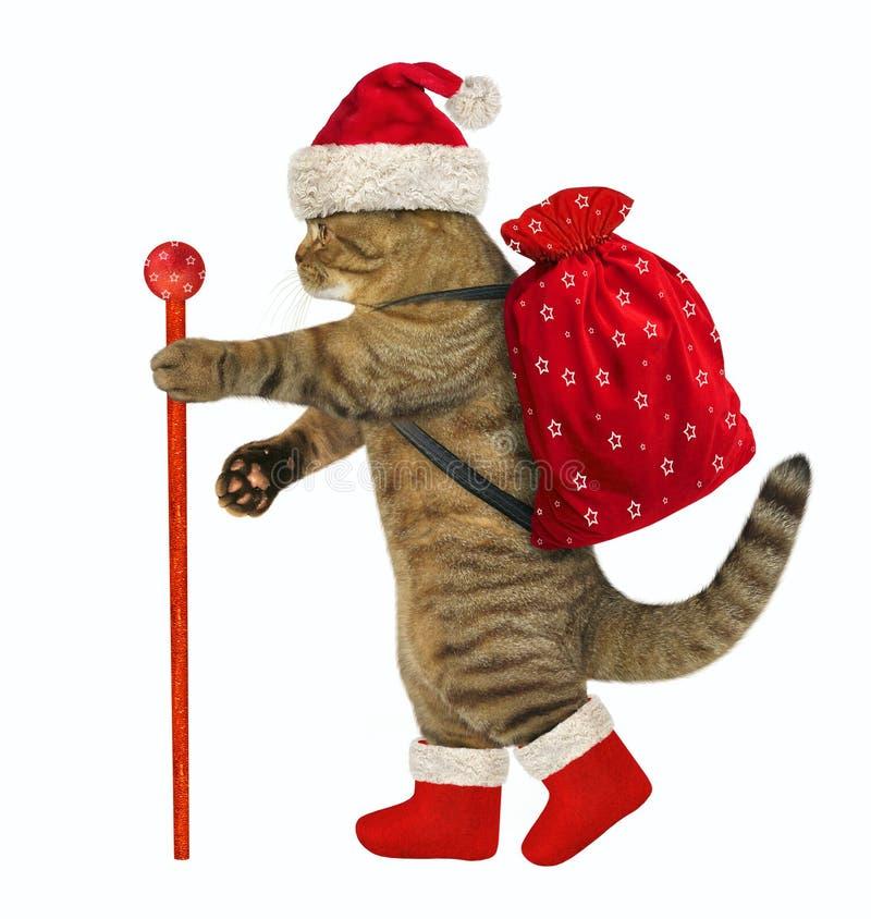 Katt med julgåvor royaltyfria foton