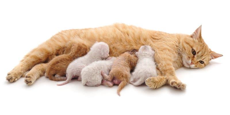 Katt med kattungar arkivbilder