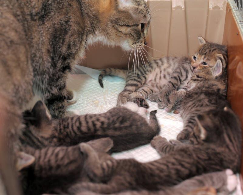 Katt med kattungar arkivfoto