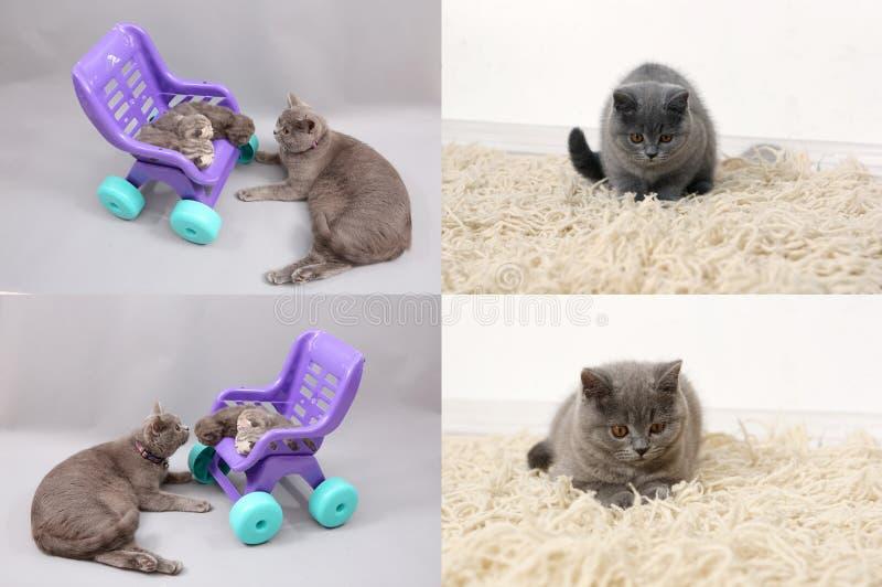 Katt med kattungar på den traditionella filten, raster 2x2, skärmsplittring i fyra delar arkivfoto