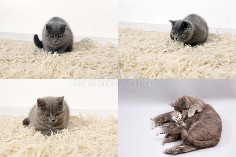 Katt med kattungar på den traditionella filten, raster 2x2, skärmsplittring i fyra delar fotografering för bildbyråer