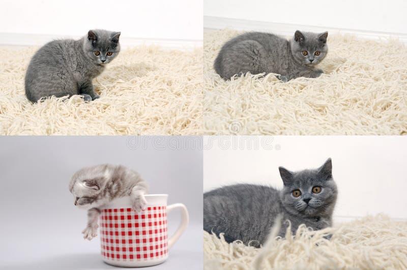 Katt med kattungar på den traditionella filten, raster 2x2, skärmsplittring i fyra delar royaltyfri foto