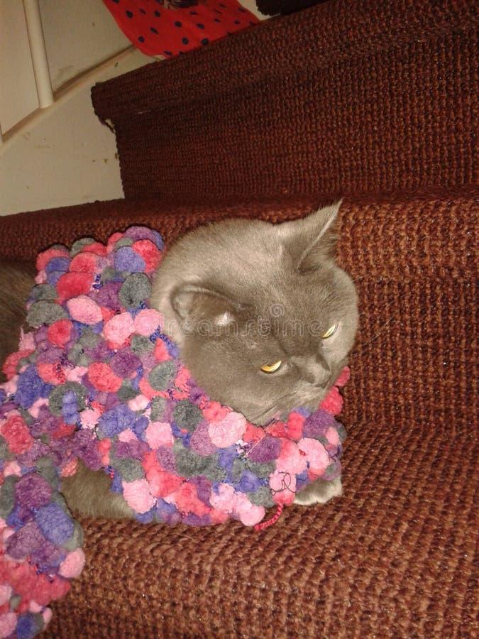 Katt med kragen royaltyfri foto
