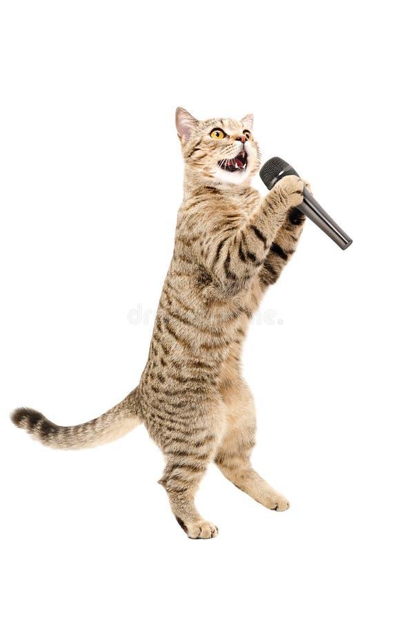 Katt med mikrofonen arkivbild