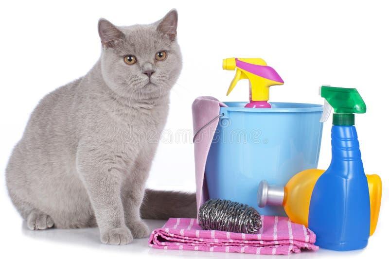 Katt med rengöringsmedel fotografering för bildbyråer