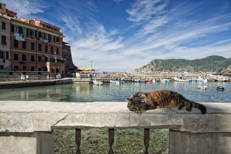Katt, medan vila i den Vernazza hamnen arkivfoton