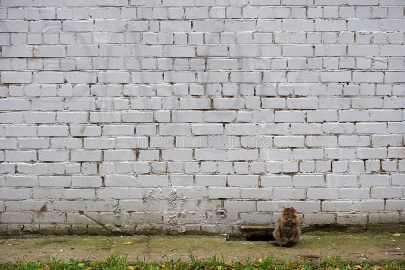 Katt nära den målade vita tegelstenväggen royaltyfria foton