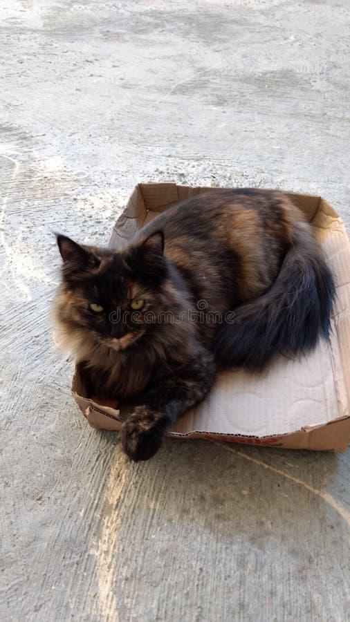 Katt och ask fotografering för bildbyråer