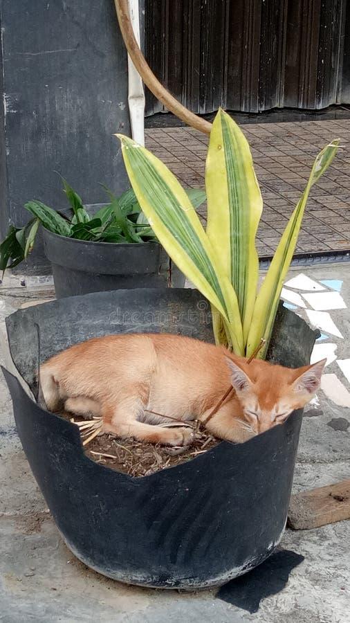 Katt och bambu arkivbilder