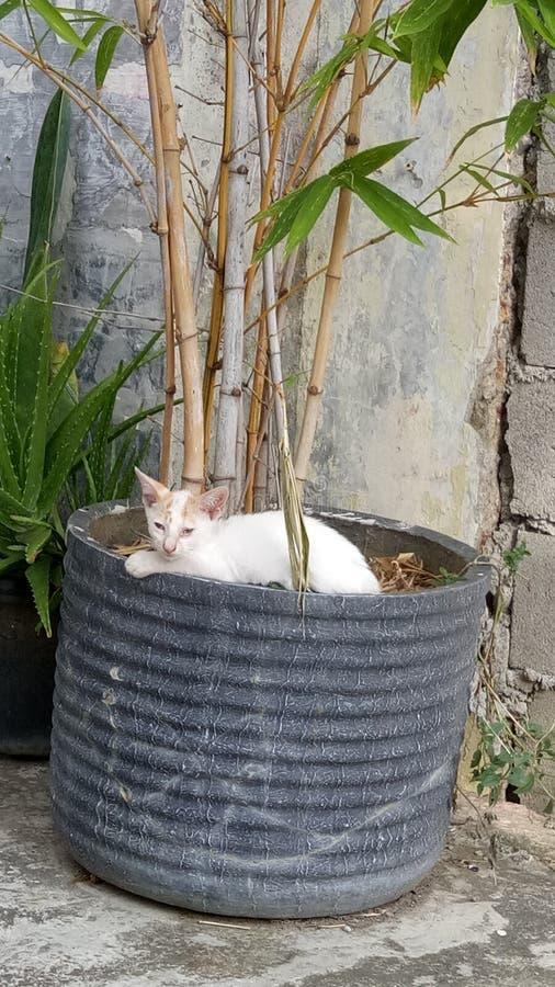 Katt och bambu arkivfoto