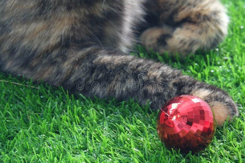 Katt och boll fotografering för bildbyråer