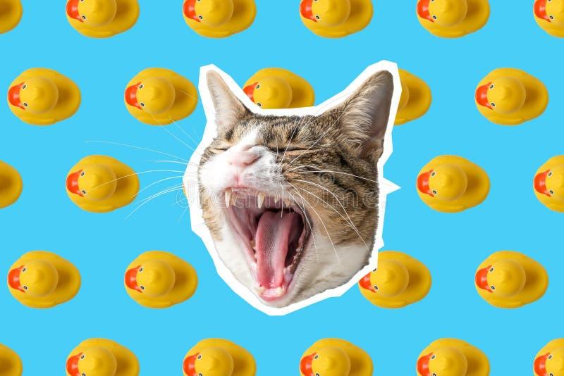 Katt- och gummiandcollage, design f royaltyfri fotografi