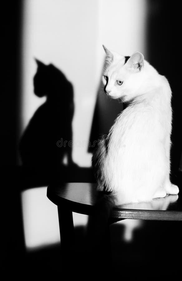 Katt och hennes skugga royaltyfri fotografi