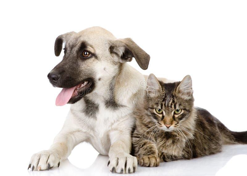 Katt och hund. royaltyfria bilder