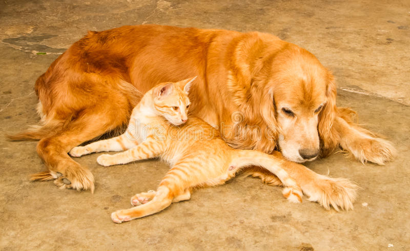 Katt och hund royaltyfria bilder