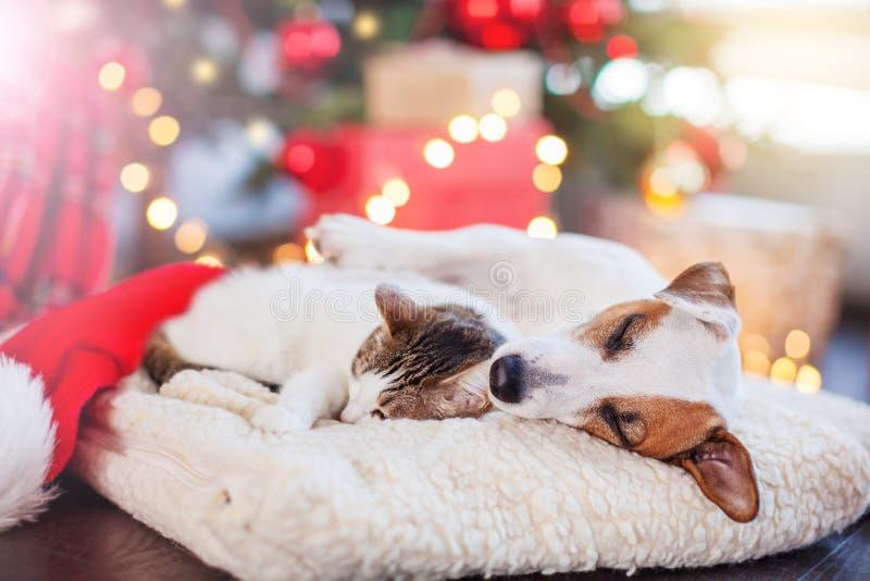 Katt och hund som sover under julträd royaltyfria foton