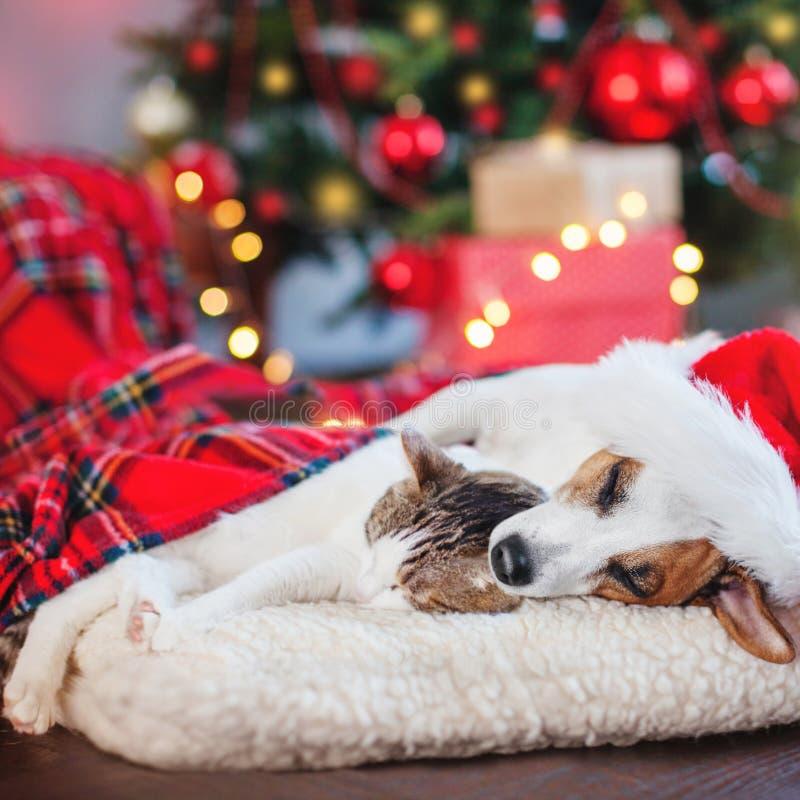 Katt och hund som sover under julträd arkivbild