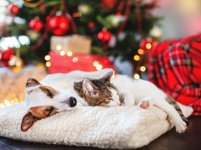Katt och hund som sover under julträd royaltyfri fotografi