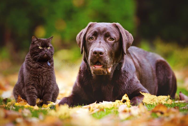 Katt och hund utomhus i höst royaltyfri bild