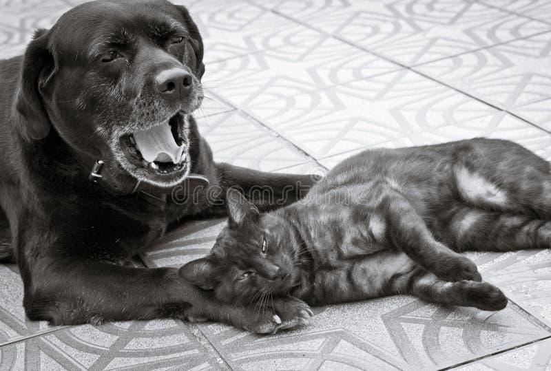 Katt- och hundkamratskap royaltyfri bild