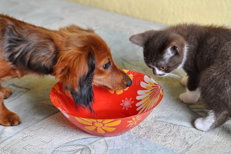 Katt- och hundmaträtt royaltyfria bilder