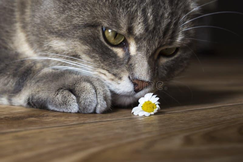 Katt och kamomill royaltyfria bilder