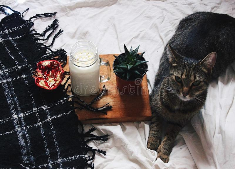 Katt och kyla royaltyfri foto