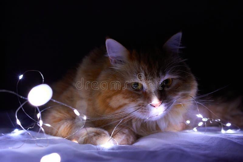 Katt och ljus royaltyfria bilder