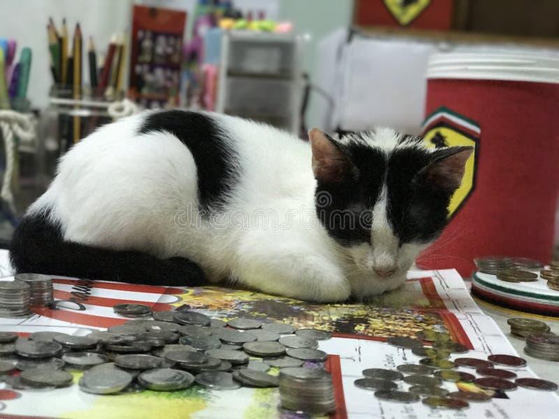 Katt och mynt royaltyfri foto